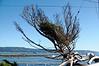 2919 - Battery Point Lighthouse - Along the California Coast Highway_DxO_DxO_1