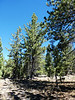 2934 - Devastated Area - Lassen Volcanic National Park - California_DxO