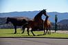 3047 - Wild horses in town - Virginia City, Nevada