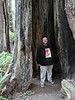 2903 - Lady Bird Johnson Grove in Redwood National Park - Along the California Coast Highway