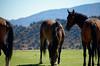 3043 - Wild horses in town - Virginia City, Nevada