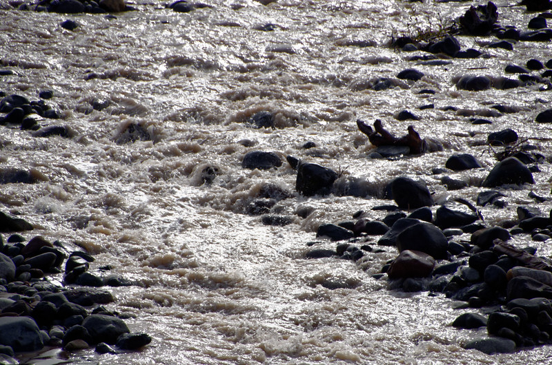 2465 - Nisqually River - Mount Rainier National Park