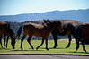 3045 - Wild horses in town - Virginia City, Nevada
