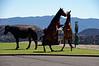 3048 - Wild horses in town - Virginia City, Nevada