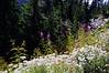 2501 - Mount Rainier National Park