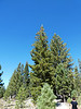 2936 - Devastated Area - Lassen Volcanic National Park - California_DxO