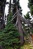 2476 - Sunrise - Mount Rainier National Park