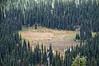 2506 - Mount Rainier National Park
