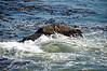 2915 - Battery Point Lighthouse - Along the California Coast Highway_DxO_DxO_1