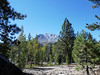 2933 - Devastated Area - Lassen Volcanic National Park - California_DxO