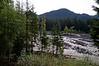 2458 - Nisqually River - Mount Rainier National Park