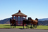 3040 - Wild horses in town - Virginia City, Nevada_DxO