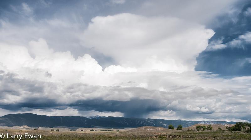 Bighorns at Sheridan, WY