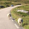 Lofoten traffic
