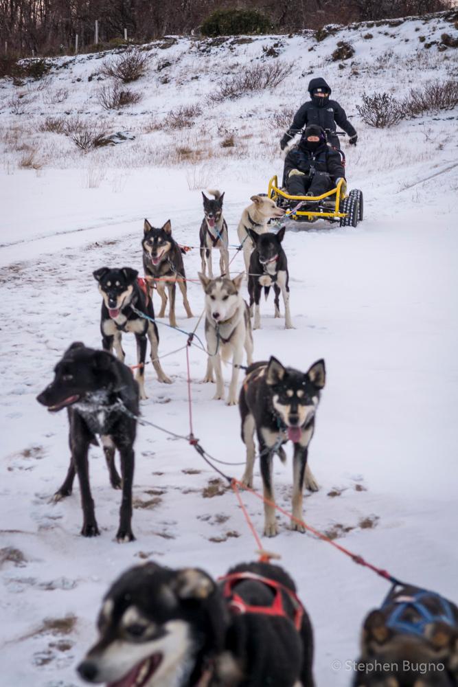 Dog Mushing in Norway