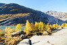 "Taken at Latitude/Longitude:61.675345/7.226533. 4.87 km West Fberg Sogn og Fjordane Norway <a href=""http://www.geonames.org/maps/google_61.675345_7.226533.html""> (Map link)</a>"