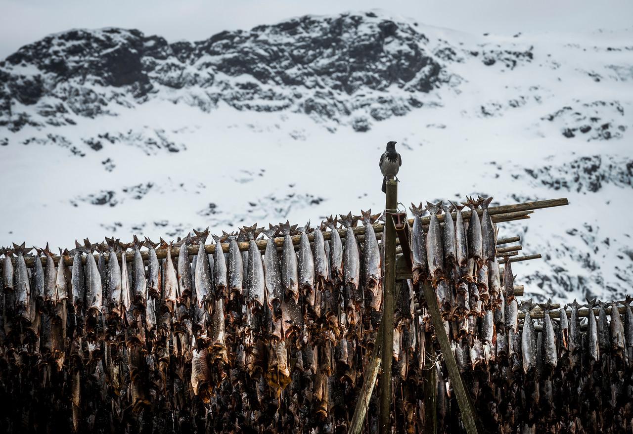 the guardian & the gøøds | å, norway