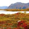 NOR- Near Hov, Lofoten IMG_2520 sm