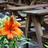 Bryggen Old Town Flower