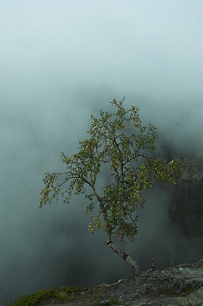 Fog in Foringfoss / Bruma en Foringfoss
