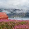 Altes Holzhaus in einem Feld von schmalblättrigem Weideröschen