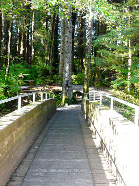 Walking across a bridge in the forest on the way to Alaska Raptor Center.