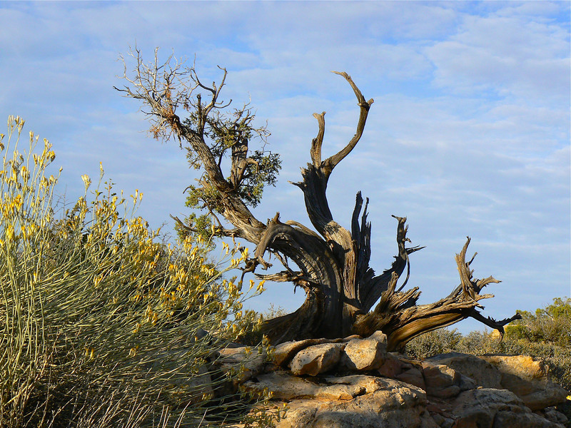 Saturday's scene: high desert driftwood