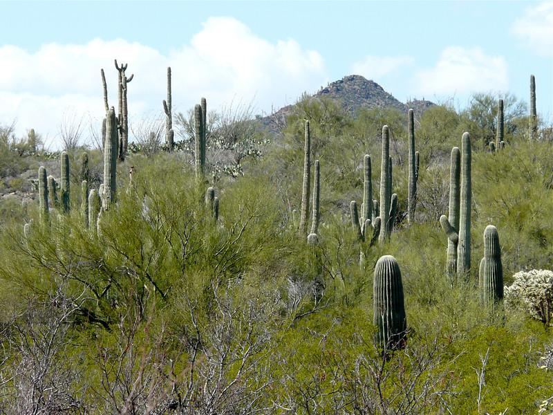 tucson-arizona-saguaro-national-park