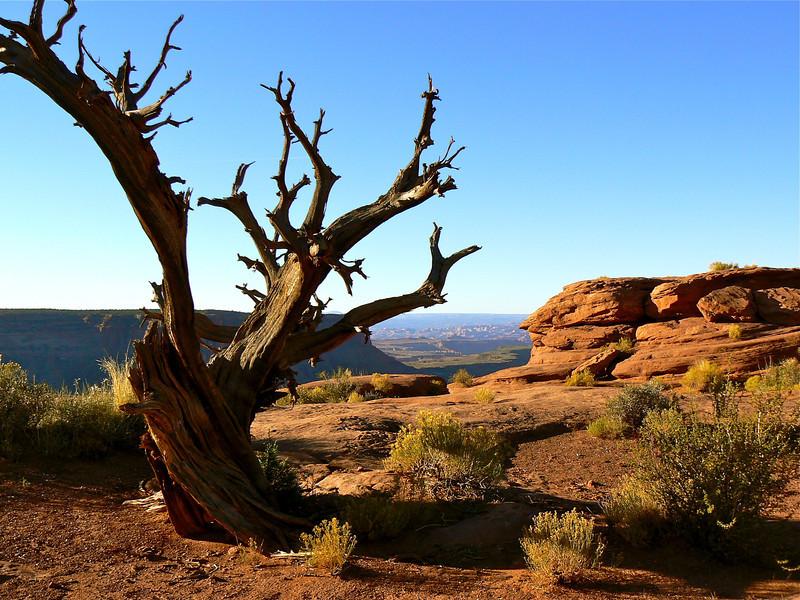 canyonlands-nature-shot-utah
