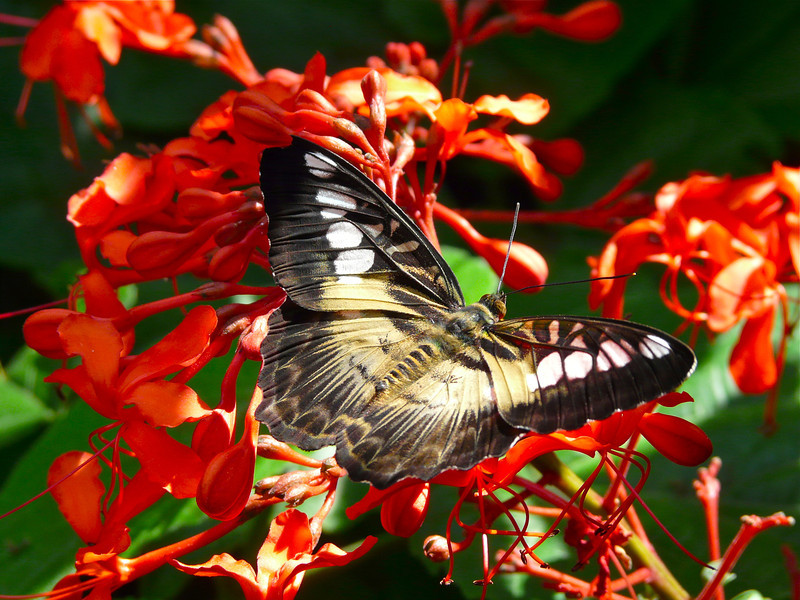 butterfly-flower-butterfly-rainforest
