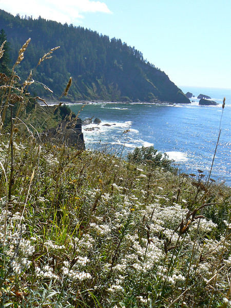boomer-hike-cascade-head-oregon