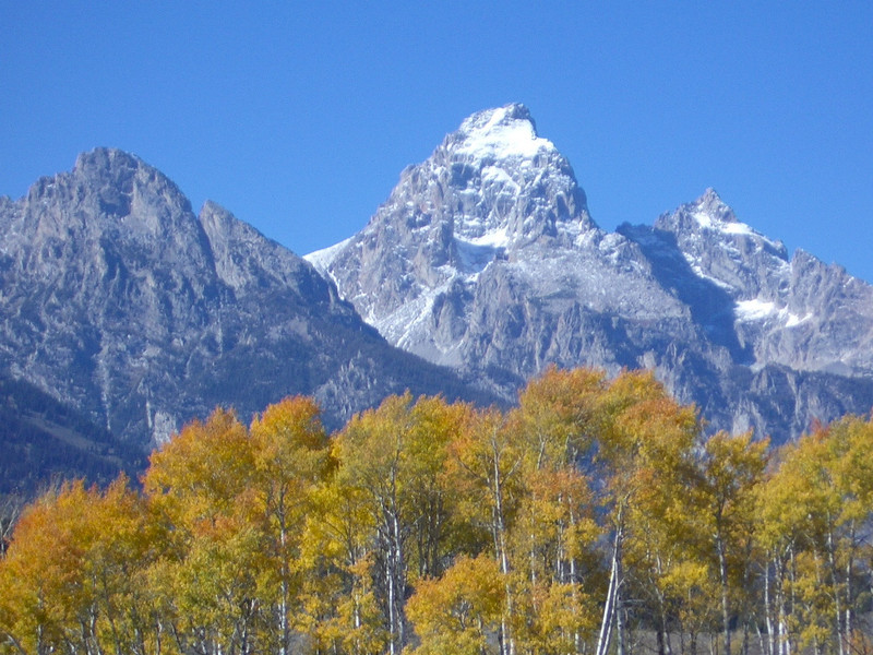 Yes, you'll see the leaves turning on a fall trip to Grand Teton National Park in Wyoming.