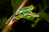 one frog jumped right on top of the other to catch a mosquito--and used her as a springboard to move