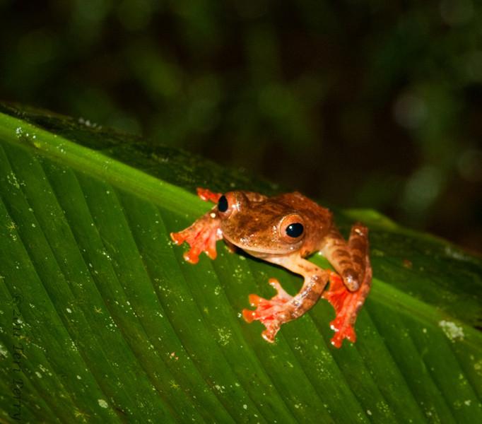 Frog @night