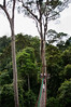 Canopy walk is fabulous for a bird's eye view of the rainforest