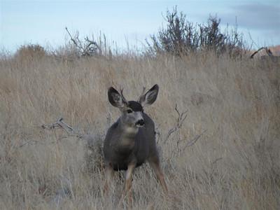 P00032_IMG_0691_Deer