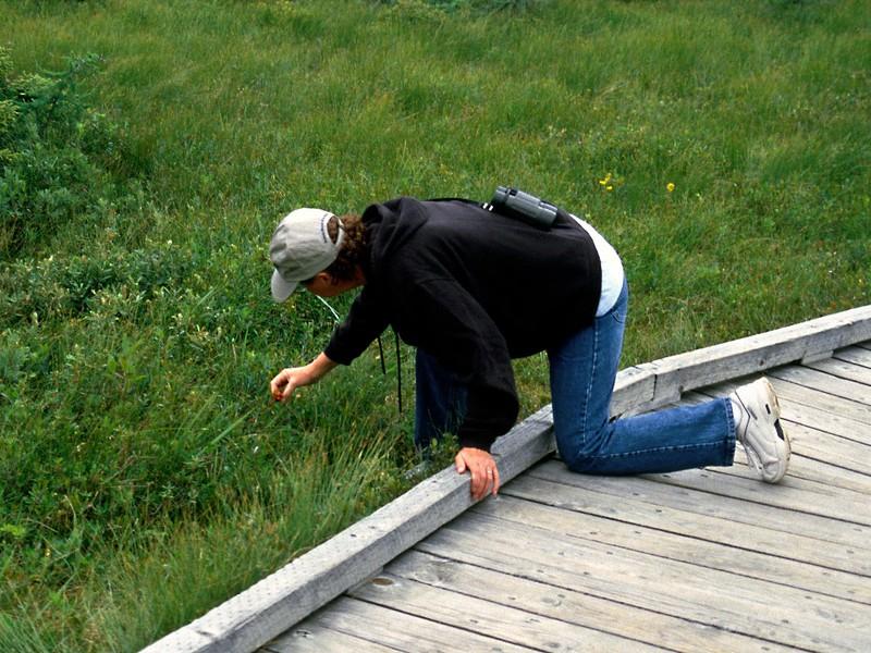 The Bog Walk, Cape Breton Highlands National Park, Nova Scotia, 8/04