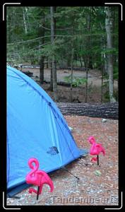 Flamingos in Acadia.