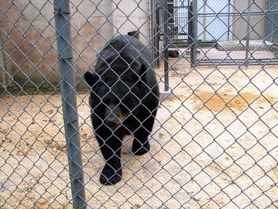 Black bear (I want to hug him)