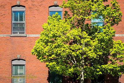 Grafton Street, Halifax.