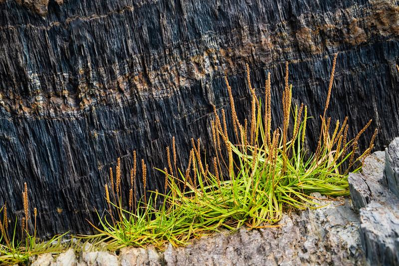 Plant growth amongst the rocks of Blue Rocks, NS.