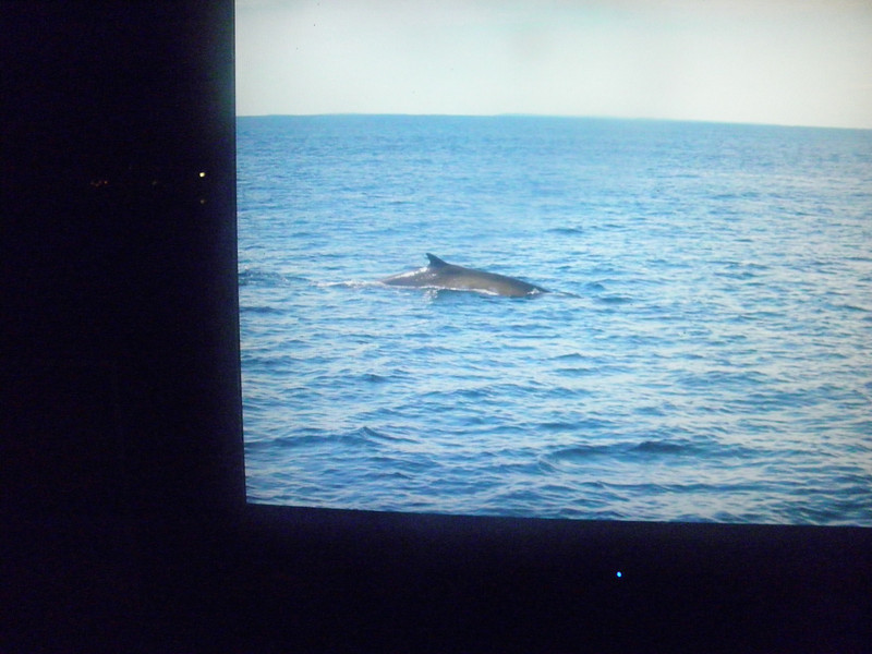 Whale across Bay of Fundy