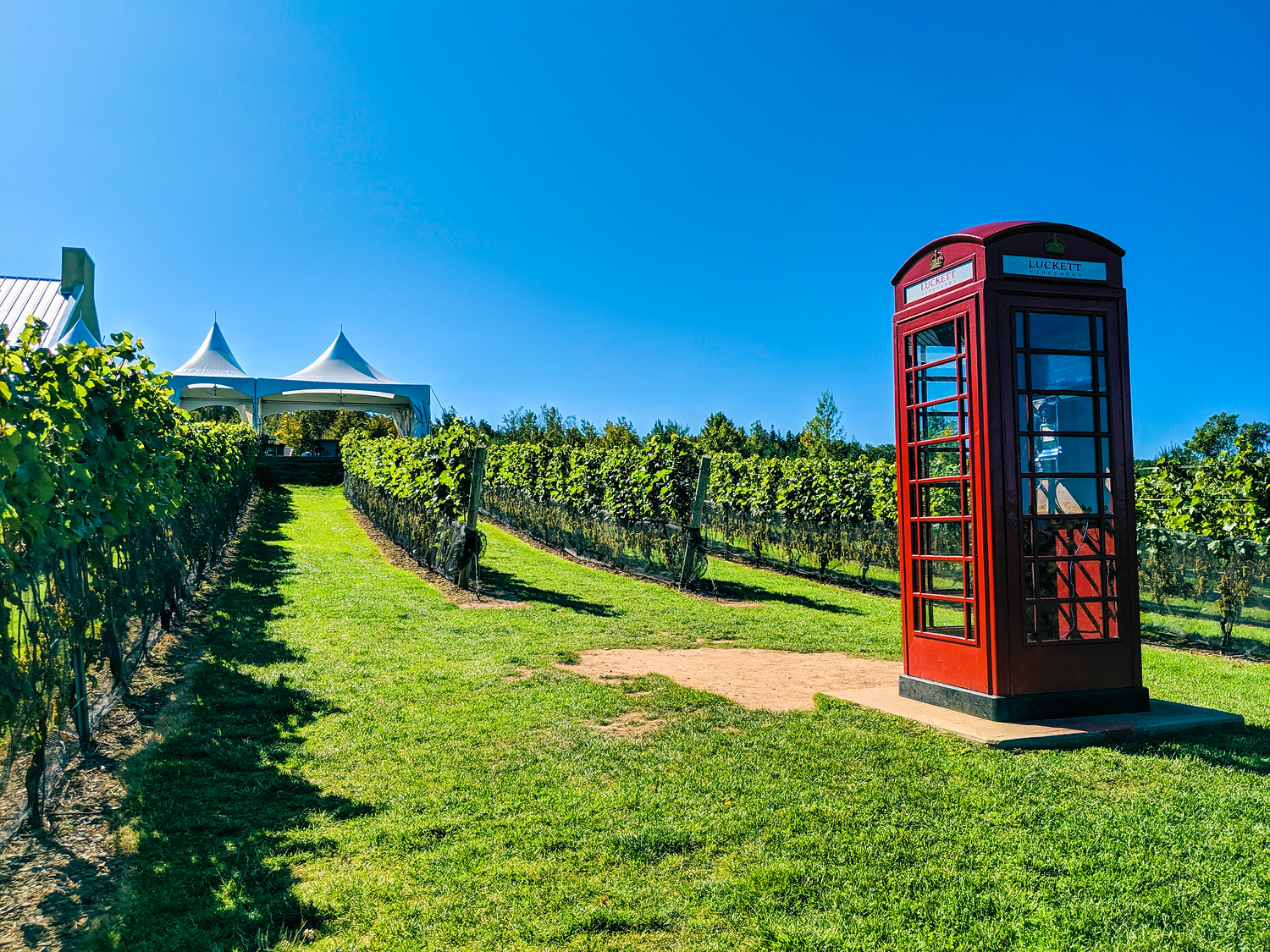 British red phone box at Pete Luckett Vineyards in Nova Scotia.