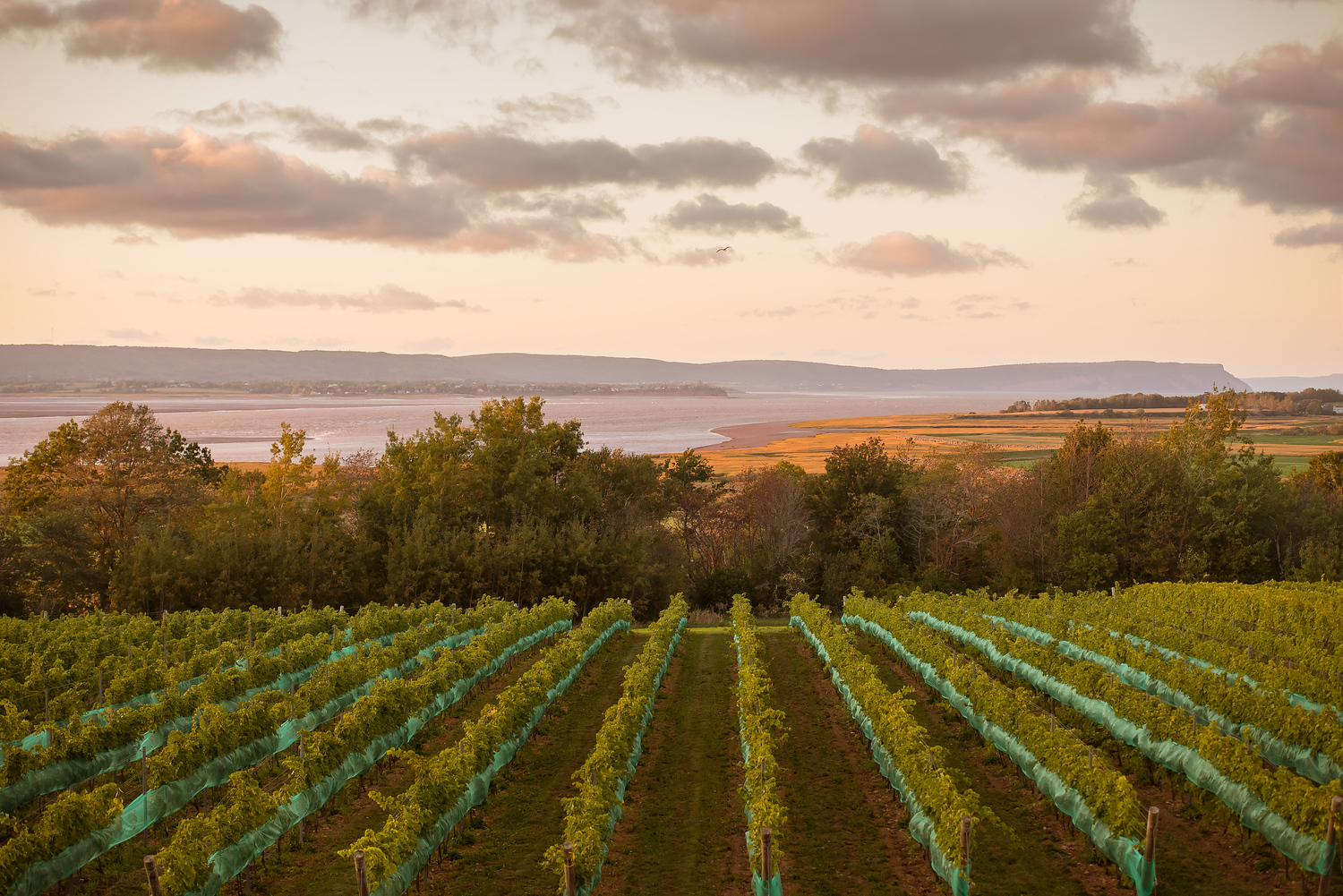 View of Cape Blomidon from Lightfoot & Wolfville winery in Nova Scotia