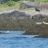Bay of Fundy, Nova Scotia<br /> Seals