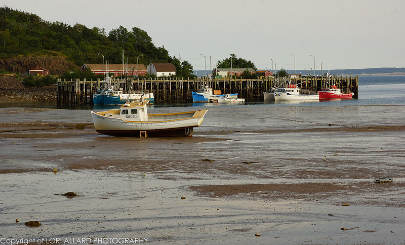 Low tide, Nova Scotia, notice the lobster cage?