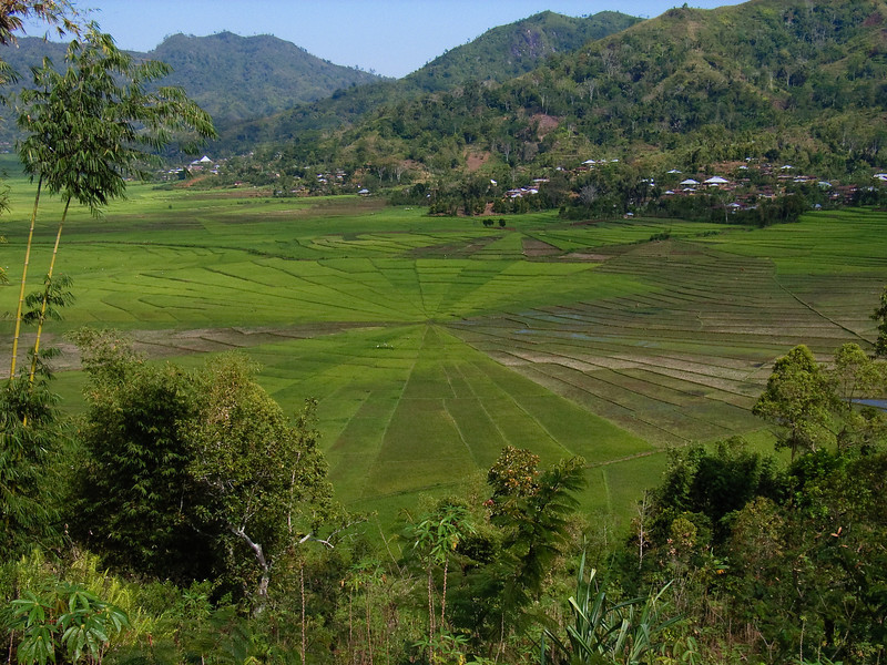Spiderweb rice fields near Ruteng, Flores