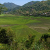 Spiderweb rice fields near Ruteng, Flores
