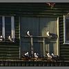 Small inhabitants on a wooden facade<br /> Nyksund