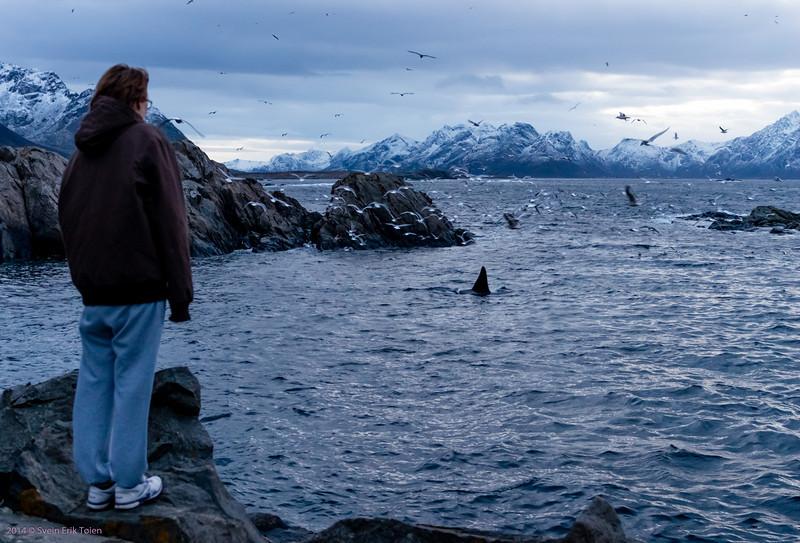 Whale-watch Nyksund I